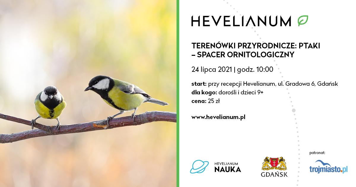 baner promujący terenówki przyrodnicze: ptaki - spacer ornitologiczny. Zdjęcie dwóch sikorek siedzących na gałązce