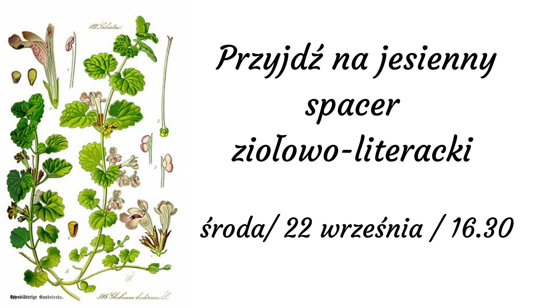 na białym tle: Przyjdź na jesienny spacer ziołowo-literacki środa 22 września 2021 16.30. Po lewej stronie rysunki polnych ziół